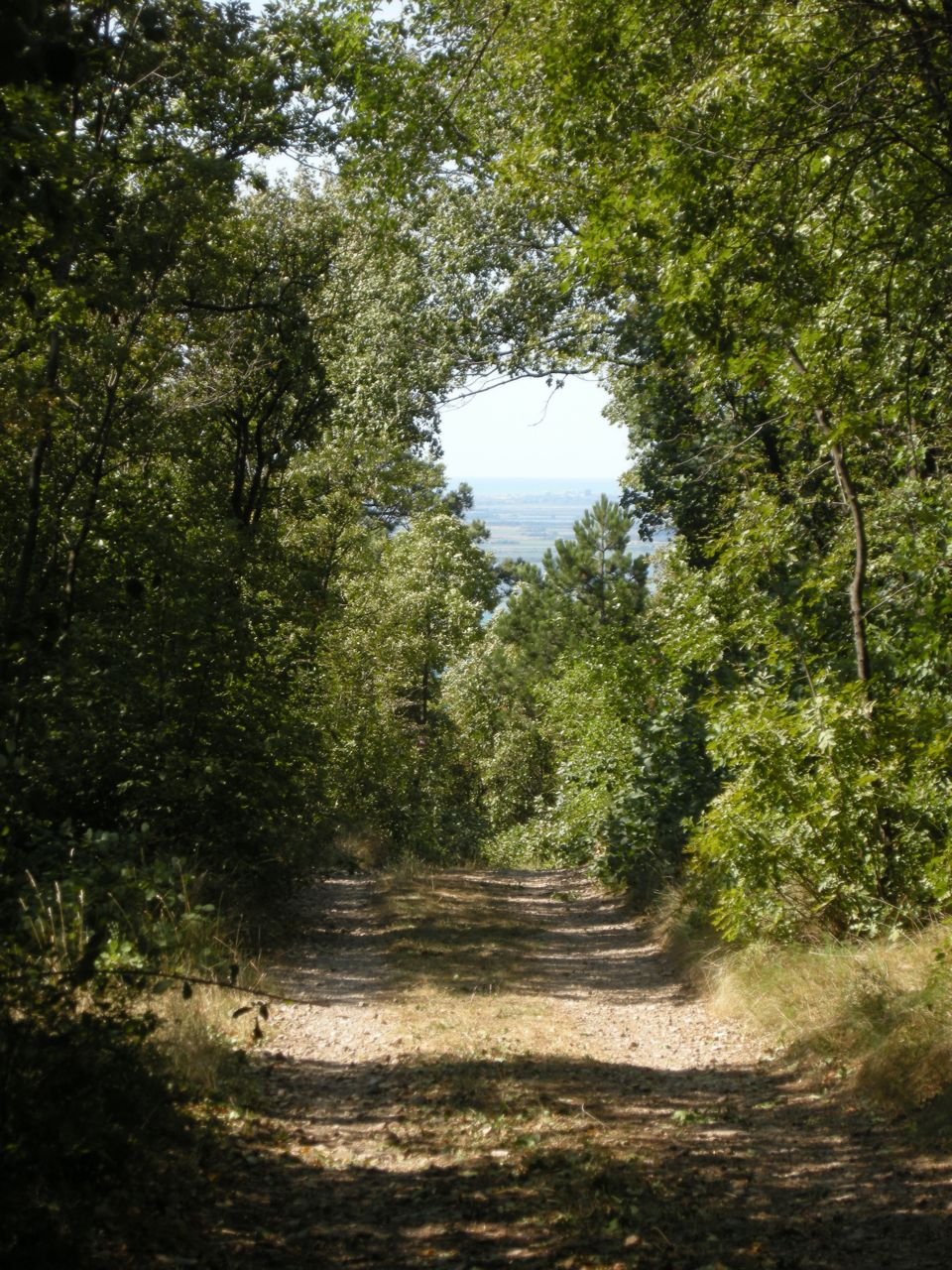 12 novembre 2011 fattoria kohi e e dolina del principe for Vecchie planimetrie della fattoria