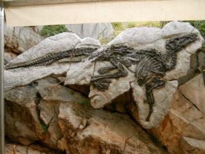 Dinosauro Antonio